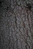 Textura de madeira real Imagem de Stock