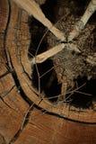 Textura de madeira real Imagens de Stock Royalty Free