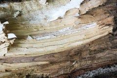 Textura de madeira resistida Fotografia de Stock