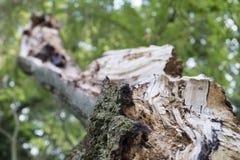Textura de madeira resistida Imagens de Stock