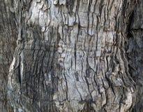 Textura de madeira sem emenda Fotografia de Stock Royalty Free