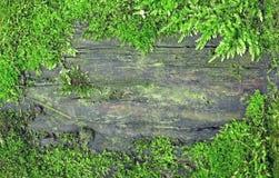 Textura de madeira suja velha no frame do musgo Foto de Stock Royalty Free