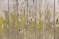A textura de madeira tem o musgo na textura Fotografia de Stock Royalty Free