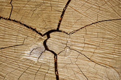 Textura de madeira tropical Imagem de Stock Royalty Free