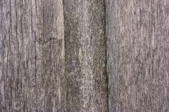 Textura de madeira velha Imagem de Stock Royalty Free
