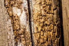 Textura de madeira velha Imagens de Stock