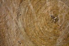 Textura de madeira velha da fatia Fotografia de Stock Royalty Free