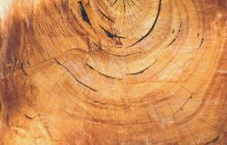 Textura de madeira velha dos anéis de árvore do eucalipto Imagem de Stock Royalty Free