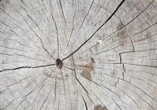 Textura de madeira velha dos anéis de árvore Fotografia de Stock