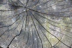 Textura de madeira velha dos anéis de árvore Fotografia de Stock Royalty Free