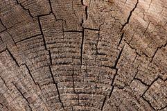 Textura de madeira velha (para o fundo) Imagem de Stock Royalty Free