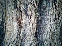 Textura de madeira velha para o fundo no estilo rústico imagem de stock royalty free