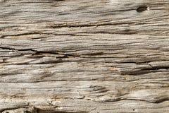 Textura de madeira fotos de stock royalty free