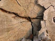 Textura de madera 1 Fotos de archivo libres de regalías