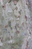 Textura de madera Foto de archivo