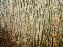 Textura de madera Imagen de archivo