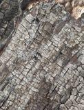 Textura de madera agrietada quemada. Imagen de archivo