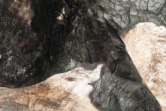 Textura de madera agrietada quemada. Fotografía de archivo libre de regalías