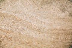 Textura de madera altamente detallada imágenes de archivo libres de regalías