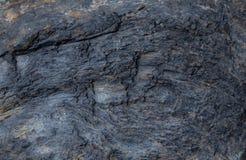 Textura de madera aterrorizada Imagen de archivo libre de regalías