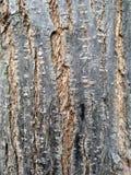 Textura de madera de Brown abstraiga el fondo foto de archivo
