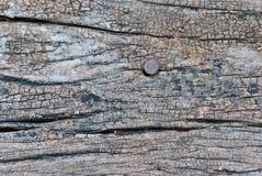 Textura de madera con el clavo oxidado Fotografía de archivo libre de regalías