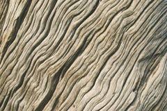 Textura de madera con el modelo natural Primer de la textura de madera Imagen de archivo