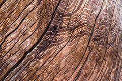 Textura de madera con el modelo natural Primer de la textura de madera Imágenes de archivo libres de regalías