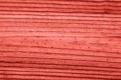 Textura de madera coralina de vida del vintage abstraiga el fondo fotos de archivo