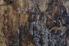 Textura de madera dañada por el escarabajo de corteza Imagen de archivo libre de regalías