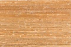 Textura de madera de abedul Foto de archivo libre de regalías