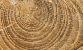 Textura de madera de Cutted Foto de archivo libre de regalías