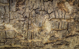 Textura de madera de la corteza Fotografía de archivo libre de regalías
