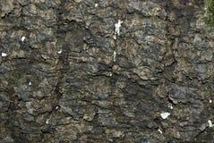 Textura de madera de la corteza con las hojas secadas Imagen de archivo