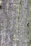 Textura de madera de la corteza de árbol Foto de archivo libre de regalías