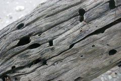 Textura de madera de la desviación Fotografía de archivo