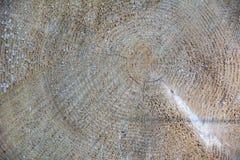 Textura de madera de la madera de construcción del árbol Fotos de archivo libres de regalías