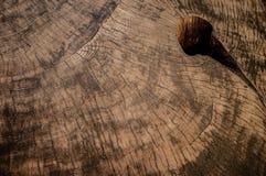 Textura de madera de la secoya Fotos de archivo libres de regalías