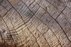 Textura de madera de la teca Imagen de archivo libre de regalías