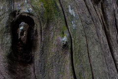 Textura de madera de la textura de la corteza de árbol/fondo de madera de la textura Imagenes de archivo