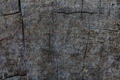 Textura de madera de la textura de la corteza de árbol/fondo de madera de la textura Imagen de archivo