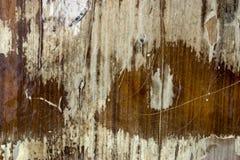 Textura de madera de la vendimia Imagenes de archivo
