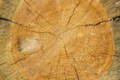 Textura de madera de pino Fotografía de archivo libre de regalías