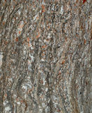 Textura de madera de pino Fotos de archivo