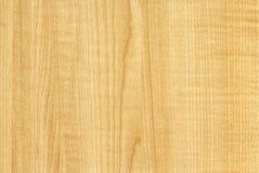 Textura de madera de Thansau del arce del primer Fotografía de archivo