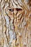 Textura de madera del árbol Fotos de archivo