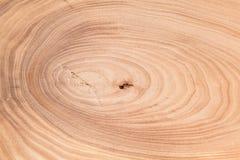 Textura de madera del árbol Imagen de archivo