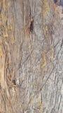 Textura de madera del árbol foto de archivo libre de regalías