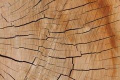 Textura de madera del árbol, ciruelo-árbol Fotos de archivo libres de regalías