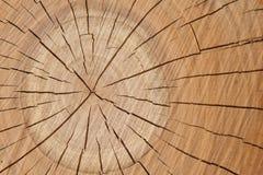 Textura de madera del árbol, ciruelo-árbol Foto de archivo libre de regalías